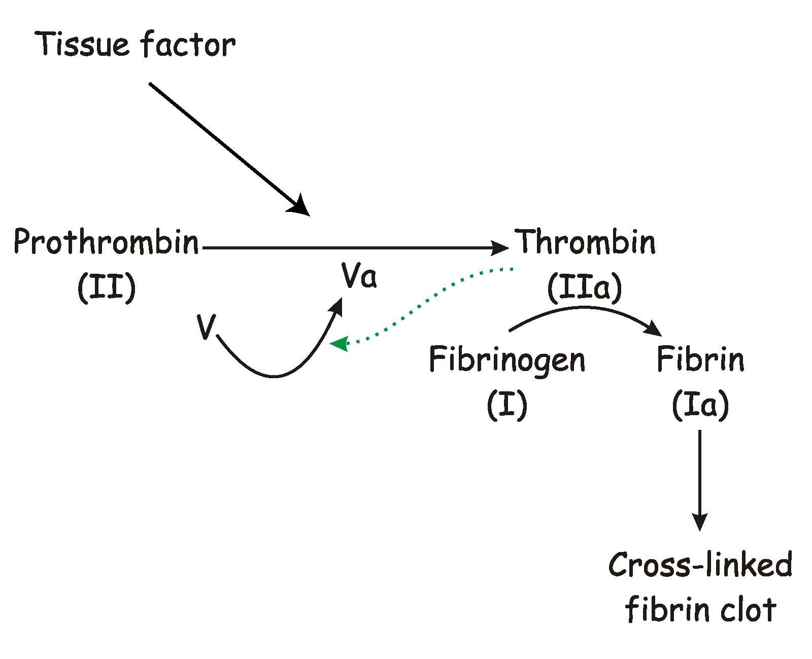 Blood coagulation. Factors, blood clotting time 24